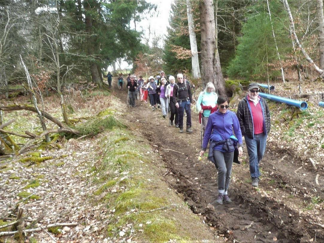 sentiers lages en forêt (Beaune le Chaud, 15 avril 2018)