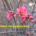 19_02_21_20_mab_culhat-_cognassier