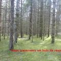 19_04_17_18_cp_gelles
