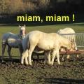 20_02_06_43_mab_marcoin