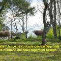 20_02_16_49_cb_chamalic3a8res