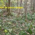 20_02_16_60_jfg_chamalic3a8res