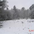 Décembre 2007 Chatrat